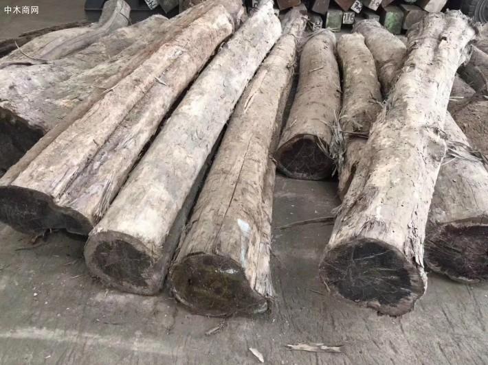 墨西哥乌木原木厂家直销