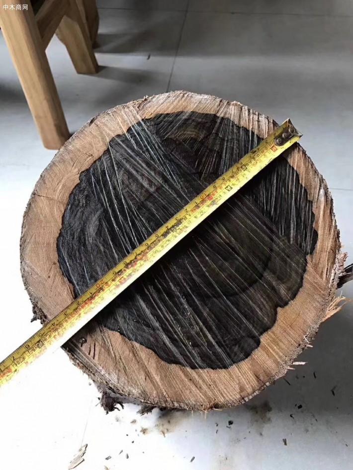 墨西哥乌木原木厂家直销图片