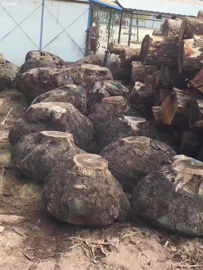 美国黑胡桃树榴厂家直销价格