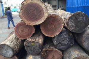 墨西哥大红酸枝原木厂家批发
