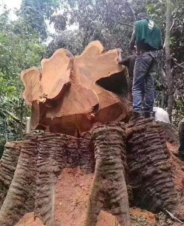 巴花是一种木材名称,又叫做巴西花梨