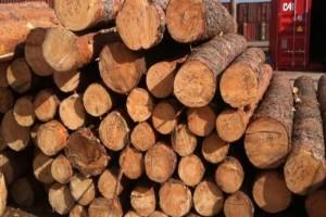 供应优质红松原木,红松板材,红松方材等批发