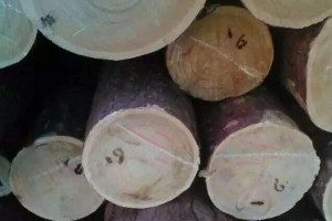 红松原木厂家最低批发价格