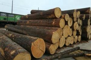 进口原木优质红松原木,东北红松质量保证木料,厂家直销木原木