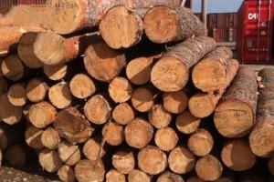 俄罗斯章松原木厂家直销,白松原木,落叶松原木,红松原木加工