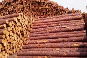 2019年国际主要木材进口国的库存都高于平均水平