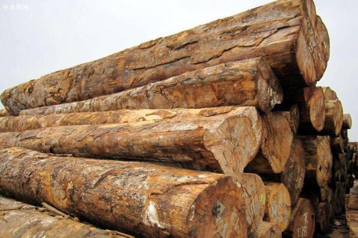 张家港进口木材因新冠肺炎疫情无法卸船