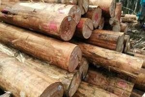 厂家直销澳大利亚桉木原木,巴西玫瑰桉木