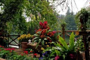 园林建设,花卉批发零售