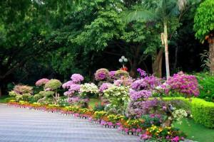 花卉技术研究开发,工程苗木种植,水培研究,景观设计,园林施工