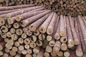 打桩木煤矿坑木落叶松白松批发销售防汛木桩