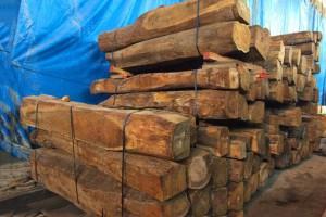 非洲加纳北部刺猬紫檀原木批发,精品方料现货供应