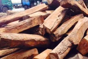 非洲进口精品刺猬紫檀原木现货出售,欢迎选购