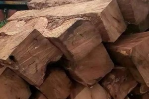 刺猬紫檀原木,非洲亚花梨,小叶红檀,一手货源品种多质量优价格低