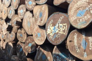 专业供应红木国标鸡翅木原木,斯崖木豆家具材,茶盘装修用材
