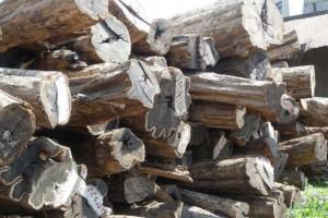 专业供应巴新所罗门材紫光檀原木,装修用材批发