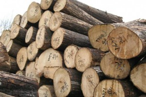 专业供应巴新材八果原木,装修用材,木方托盘材批发