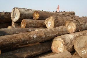 专业供应巴新所罗门材,大TB原木,装修用材批发
