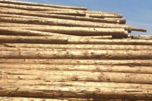 铁杉原木原产地直销