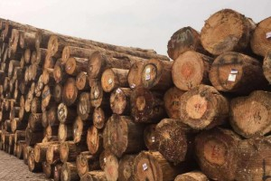 2020新西兰木材承包商已经停止原木采伐
