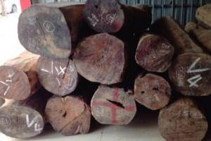 收藏极品老挝大红酸枝原木和方木,新料和老料各半