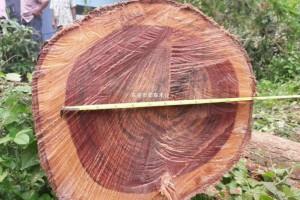 500亩大红酸枝泰国林地-