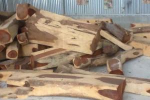 出售微凹黄檀原木,南美大红酸枝大方批发