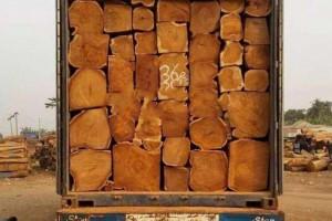 广东多地木材市场复苏信号显现新货卸柜