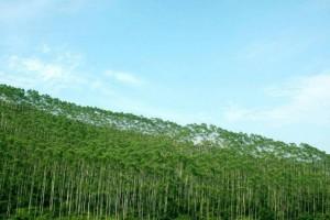 浙江省级以上重点林业龙头企业已有183家开始复工,复工率达到63%