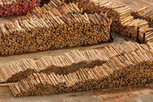 """新西兰木材商""""囤货""""等待中国进口木材反弹"""