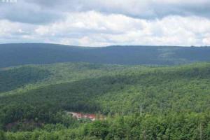 俄罗斯联邦林业署在林地木材租赁检查工作中终止了32项协议