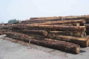 受森林虫灾影响,捷克木材砍伐和贸易量大幅增加