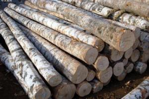 福建省厦门打响减免港口木材费用第一枪