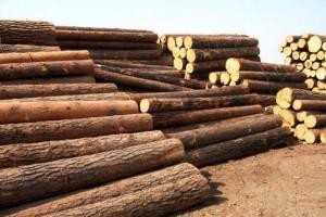"""因疫情被迫延长假期的中国木材市场""""小阳春""""行情正在起步?"""