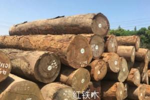 优质非洲红铁木原木批发