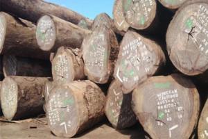 低价供应进口红铁木原木