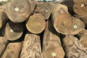 厂家直销精品红铁木原木500方直径50-110.公分优价处理