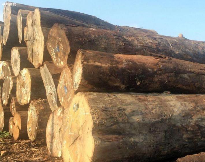 求购:原木2.4米长直径0.35米