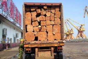 尼日利亚刺猬紫檀原木厂家直销