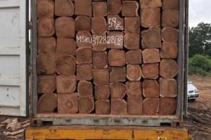 优质刺猬紫檀大方,非洲亚花梨原木木材一手货源
