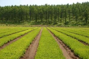 可定制各类苗木品质保证货源充足