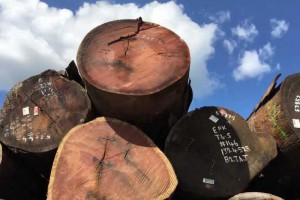 惠州星凯源实业南美进口原木产品图片