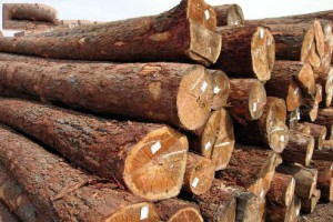 欧洲进口原木高清图片