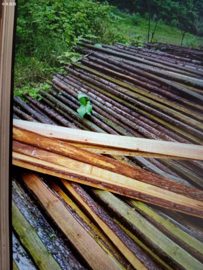 杉木木方,杉木锯材,杉木木条林场直供厂家