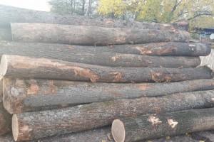 欧洲白橡木原木原产地直销