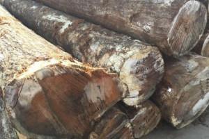 优质美国红橡原木