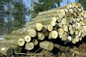 优质白蜡木原木批发
