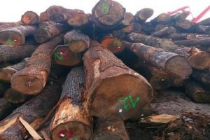 优质美国白橡木原木批发