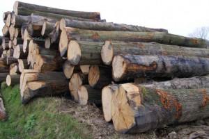 美国林木产品销售美国红橡木,白橡木,白蜡木,南方松原木高清图片