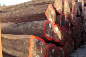 张家港中弘木业菠萝格,巴蒂木,山樟木原木板材高清图片